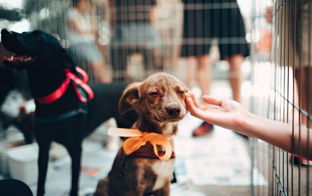 pet a puppy